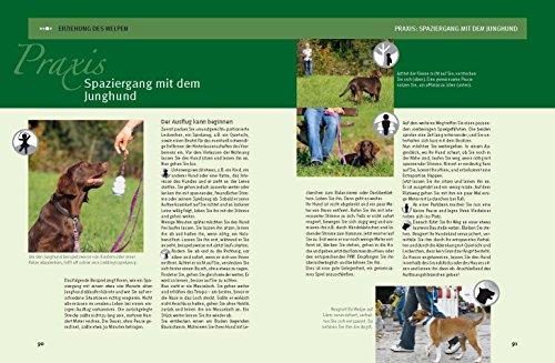 Hundeschule für jeden Tag: Erziehung die dem Hund Spaß macht - 7
