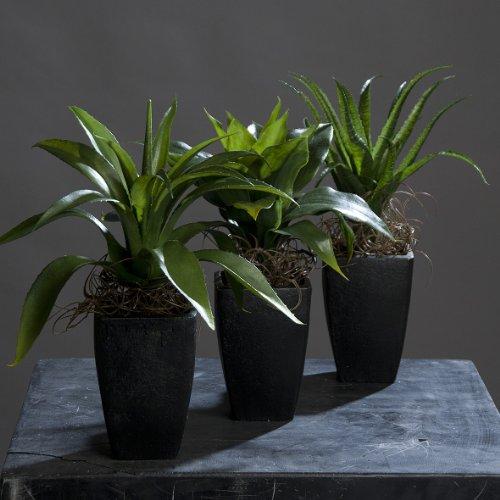 Agaven im Keramiktopf 30 cm 3er Set Kunstpflanzen von DPI