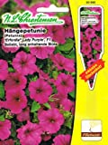 Hängepetunie 'Erfordia® Lady Purple' F1 , Pillensaat, beliebt, lang anhaltende Blüte, purpurrot ( mit Stecketikett) , 'Petunia grandiflora pendula'
