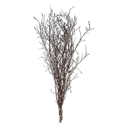 Birkenzweige (ca. 60 cm) im Bund - großer, Dicker Bund Birkenreisig - ideal für die Oster- und Frühlingsdekoration