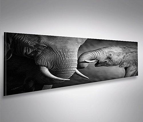 Cuadro Panoramico Elefanten V2 Panoramico Elefantenbaby Impresión sobre Lienzo - Formato Grande...