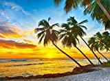 VLIES Fototapete BARBADOS PALM BEACH-(378vp)-350x260 cm in 7 BAHNEN 50 cm B.x260 cm H. -Digitaldruck! Spezialkleber für Vliestapete!- Non Woven Wall XXL Phototapete Foto Mural Photo Bildtapete Fotomural City Insel Meer Pferd Skyline Steine Strand Wald