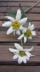 Edelweiss 3 Blüten Textil, Kunstblume, künstlich, Edelweiss, Landhaus