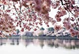Papier peint Motif fleurs Rose lac et arbres Décoration murale-POSTER géant-Papier