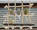 Kletternetz für Wellensittich, Nymphensittich & Co. Dieses Vogelspielzeug ist das perfekte Turnspielplatz - 4
