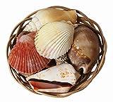 Surtido de Conchas Tropicales en una Cesta de Mimbre Decorativa