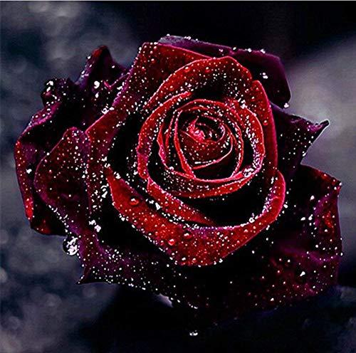 5D DIY Diamond Painting Cross Stitch, Decoration of House Living Room,Rose,flowers,30x30cm