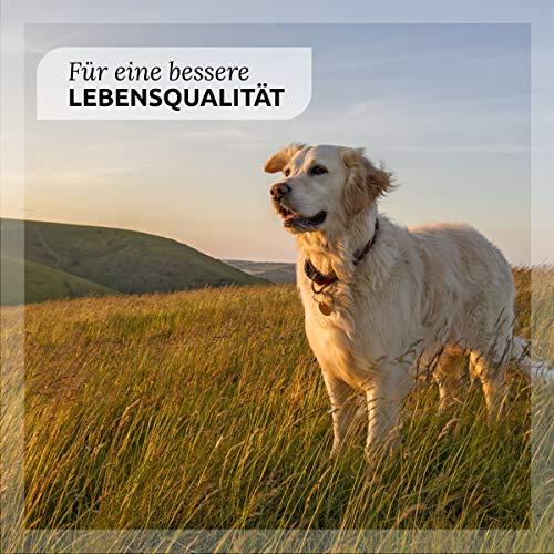 "AniForte® *Bio-Bachblüten ""Angsthase"" für Hunde 20g Globuli - 3"
