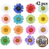 Color: Multicolor  Material: flor seca  Tamaño único: diámetro de la flor 2-3cm (0.79-1.18in)  Paquete incluido: 42 x flor seca  Nota:  - 42 flores secas están en 14 colores y cada color tiene 3.  - Consulte la medida. Se permite un pequeño e...