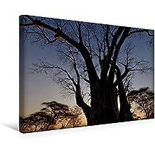 Calvendo Premium Textil-Leinwand 45 cm x 30 cm Quer, Baobab | Wandbild, Bild auf Keilrahmen, Fertigbild auf Echter Leinwand, Leinwanddruck Natur Natur