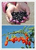 semillas de hierbas promoción !!! 200pcs/bag SEMILLAS Goji Goji Wolfberry Lycium chinense Ningxia para el jardín de la Salud Beneficios del níspero