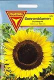 Sonnenblumen, Helianthus annuus, ca. 10 Samen