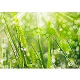 Vlies Fototapete PREMIUM PLUS Wand Foto Tapete Wand Bild Vliestapete - Blumen Blüte Natur - no. 199 Natur Gras Wiese Halm Sonne, Größe:300x210cm Vlies