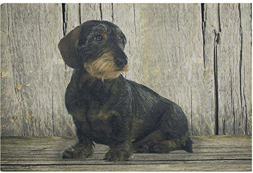 Felpudos Perros con sitzendem perro salchicha 75x 50cm