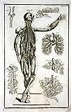 Blood vessels Blutgefäße human Mensch medicine Medizin Kupferstich engraving antique print