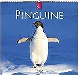 PINGUINE: Original Stürtz-Kalender 2018 - Mittelformat-Kalender 33 x 31 cm