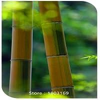 Nuovi 50 Pc rari semi viola di bambù, Attraente Bonsai semi, libero Albero Spedizione Semi arancione - Inverno Fioritura Alberi