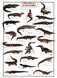 Coccodrilli e Alligatori Stampa Artistica (67,95 x 97,79 cm)