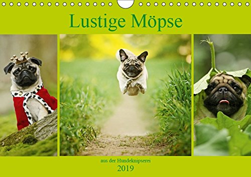 Lustige Möpse aus der Hundeknipserei (Wandkalender 2019 DIN A4 quer): Diese Mopshunde sorgen jeden Tag für einen Schmunzler (Monatskalender, 14 Seiten ) (CALVENDO Tiere)