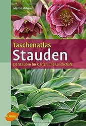 """3 Astilben gemischt Prachtspiere /""""3 Wurzelstücke/"""" Winterhart Staude Astilbe"""