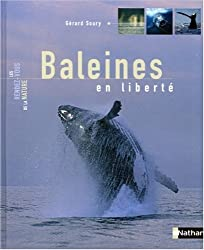Baleines en liberté