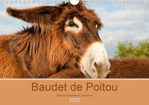 Baudet de Poitou - Seltene französische Langohren (Wandkalender 2020 DIN A4 quer): Wunderschöne Fotografien seltener Esel (Monatskalender, 14 Seiten ) (CALVENDO Tiere) -