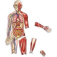 Double Sided magnetica del corpo umano