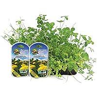 ProRep Tortuga Alimentar Semillas 20g (Recambio para Alimentar Para cultivar Kit)