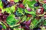 Portal Cool Salat 15 Verschiedene Gewürze- Typen Kräuter Gemüsesamen