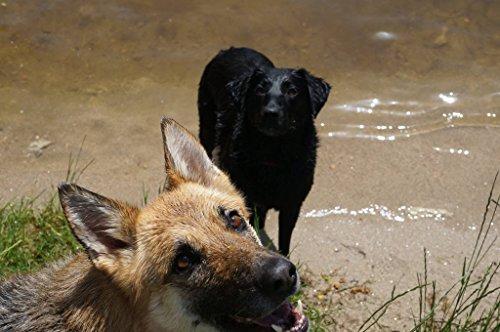 GWF Joint Aid Hundefutter, fördert die Gelenke - 4