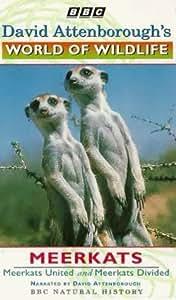 David Attenborough's World Of Wildlife 9 - Meerkats United / Meerkats Divided [VHS]
