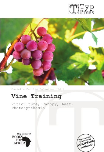 Vine Training: Viticulture, Canopy, Leaf, Photosynthesis