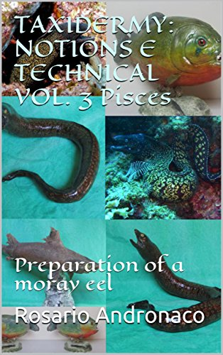 TAXIDERMY: NOTIONS E TECHNICAL VOL. 3 Pisces: Preparation of a moray eel (English Edition)