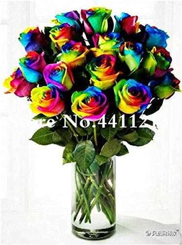 Bloom Green Co. 100 Pcs/bag Chinese Rainbow Rose Flower Rose Bonsai Tree Plant Chinese Roses Mix Colors Give Lover Plant for Home Garden: 6