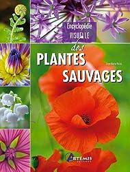 ENCYCLOPEDIE VISUELLE DES PLANTES SAUVAGES
