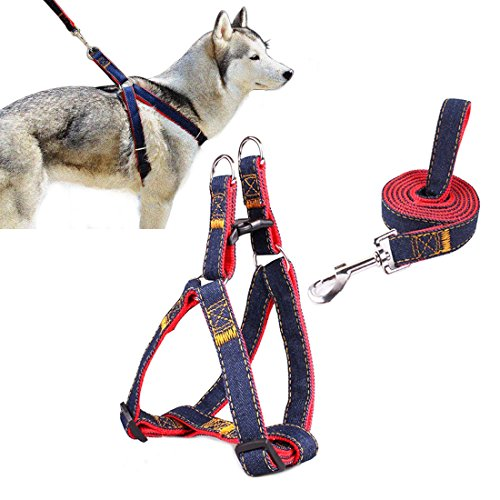 Cablaggio dell'animale domestico, Ambielly Jean cane conduce