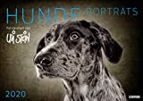 Uli Stein Hunde Portraits 2020