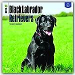 Black Labrador Retrievers 2017 Calendar