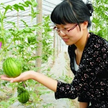 20pcs Mini-Wassermelone Samen Gemüse Früchte und Samen Wassermelone skgs essbaren Balkon Bonsai