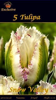 """Rarität: Gefranste Viridifloratulpe Tulpe """" SNOW VALLEY """" von MOSSELMAN - Du und dein Garten"""