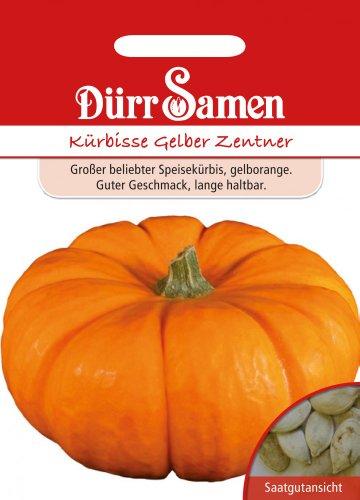 Dürr-Samen Kürbis Gelber Zentner
