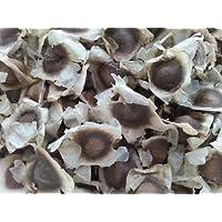500 Moringa Oleifera Seeds Drumstick Tree Pure Organic 100% by Thai JJ