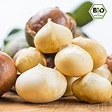 ✅ Gesunde Edel Bio Macadamia Nüsse / Macadamianüsse / Macadamiakerne 1kg in bester Rohkost-Qualität ohne Schale aus Kenia (Ernte März 2018), natur, naturbelassen, unbehandelt, ungesalzen, ungeröstet, ohne Salz, roh