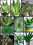 PLAT firm-SEMI Aloe Vera, la rotazione di aloe vera, Aloe semi Succulente polyphylla, ci sono effetto cosmetico di piante 300pcs Fiori