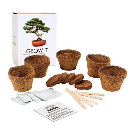 Mostromania - kit per bonsai fai-da-te - pianta il tuo bonsai - set completo grow it per bonsai misti - idea regalo originale - regali per lui e per lei - regali di natale