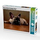 Rocky - Französische Bulldogge,16 Wochen 1000 Teile Puzzle quer