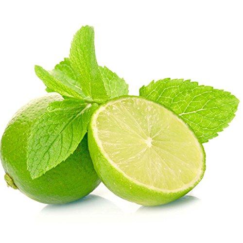 200 pc Graines aromatiques et des plantes de citron menthe balcon semences de légume en pot Graines de citron menthe Plante vivace de croissance