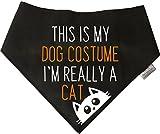 Spoilt Rotten Pets Hundehalstuch, S2, Halloween-Motiv: Really a Cat, in 4 Größen erhältlich für kleine Chihuahuas bis zu großen Neufundländern, für einen kleinen Hund