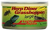 Lucky Reptile Herp Diner Grasshoppers groß 35 g