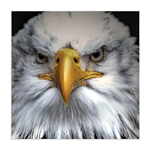 banjado Magnettafel aus Edelstahl | Memoboard magnetisch 50x50cm | Pinnwand mit Motiv Adler -